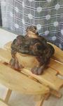 6-蛙さん.jpg