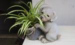 犬と植木鉢.jpg